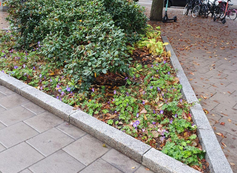 höst-i-stockholm-oktober-blommor
