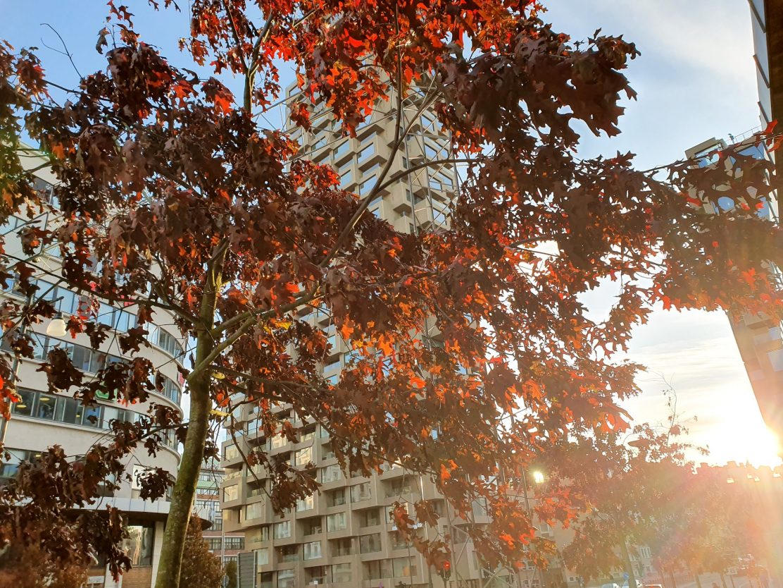 höst-stockholm-torsplan-november-röda-löv